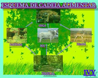 ESQUEMA-IVY