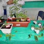 feira-de-ciencias-fund2-16