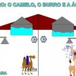 CAMELO CLARA