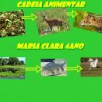 CADEIA ALIMENTAR MARIA CLARA