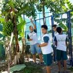 Investigando Plantas (11)