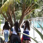 Investigando Plantas (13)