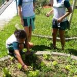 Investigando Plantas (18)