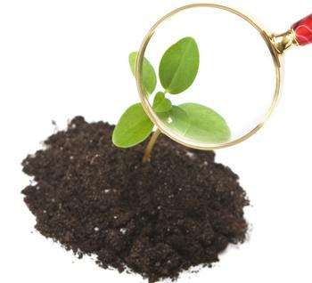Investigando Plantas (19)