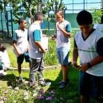 Investigando Plantas (8)