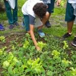 Investigando-plantas-parte-2 (1)