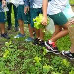 Investigando-plantas-parte-2 (2)