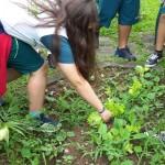 Investigando-plantas-parte-2 (3)