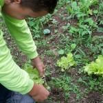 Investigando-plantas-parte-2 (5)