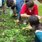 Investigando-plantas-parte-2 (7)