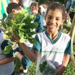 4º ano 1ª colheita 2018 (16)