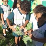 4º ano 1ª colheita 2018 (3)