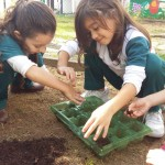 1º ano Plantando Salsa (3)