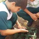 1º ano Plantando Salsa (6)