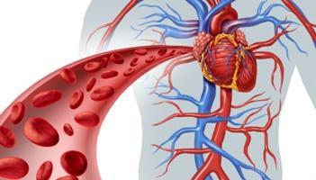 8ºano Ciências Sistema Circulatório (0)