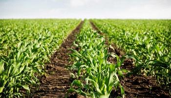 1.º ano campo agropecuario (0)