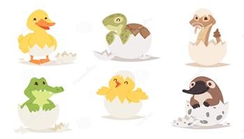1.º ovos de massinha (0)