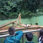 Zoológico (25)