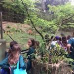 Zoológico (28)