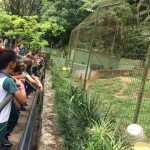 Zoológico (29)