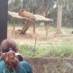 Zoológico (44)