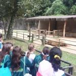 Zoológico (53)