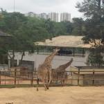 Zoológico (56)