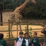 Zoológico (59)
