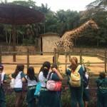 Zoológico (60)