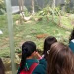Zoológico (9)