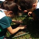 1.º ano Plantio da Horta (1)