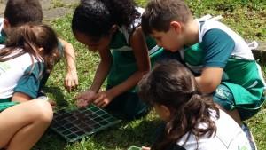 1.º ano Plantio da Horta (12)