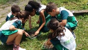 1.º ano Plantio da Horta (13)