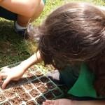 1.º ano Plantio da Horta (16)