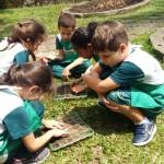 1.º ano Plantio da Horta (4)